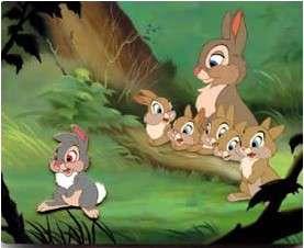 Thumper Family